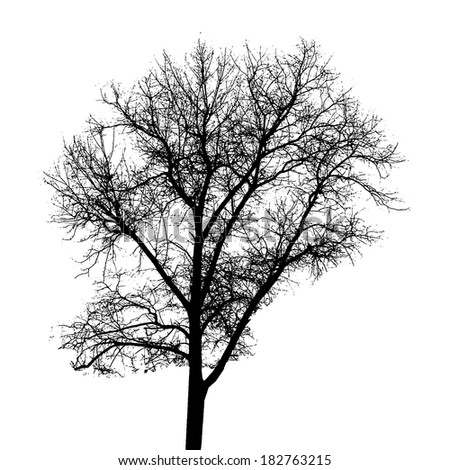 Tree Silhouette Isolated on White Backgorund. Vector Illustration