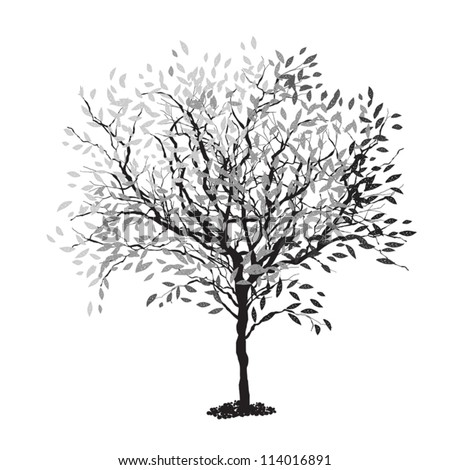 Tree silhouette. The trunk and leaves in separate layers. Vector illustration, EPS8. - stock vector