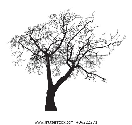 Tree silhouette, without leaves, black isolated on white background, vector illustration.