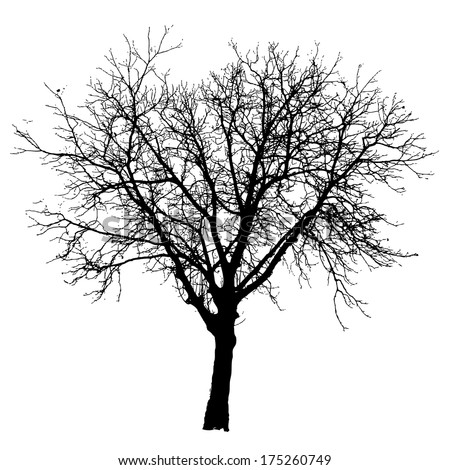 Tree vector illustration. - stock vector