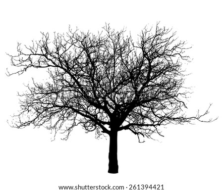 Tree vector illustration. - stock vector