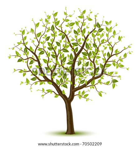 Tree with green leafage. Vector. - stock vector