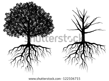 Tree with roots isolated on white. Vector illustration - stock vector