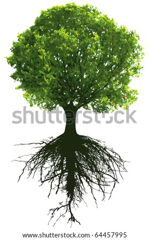 Trees with roots. This image is a vector illustration and can be scaled to any size without loss of resolution. - stock vector