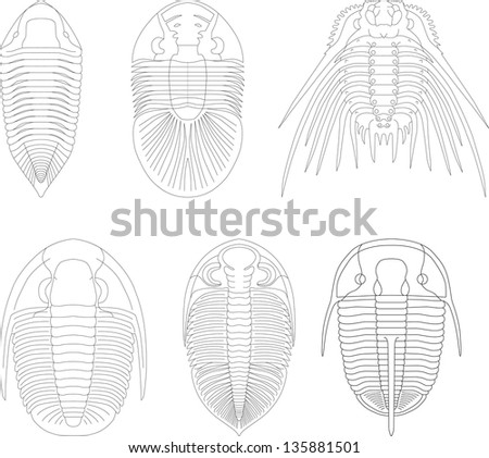 Trilobite - stock vector