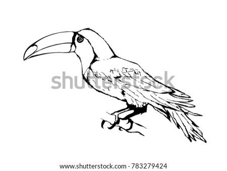Tropic Bird Toucan