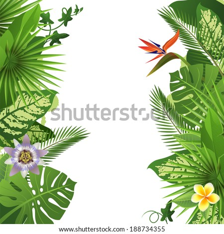 tropical background - stock vector