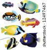 tropical fish collection - vector - stock photo