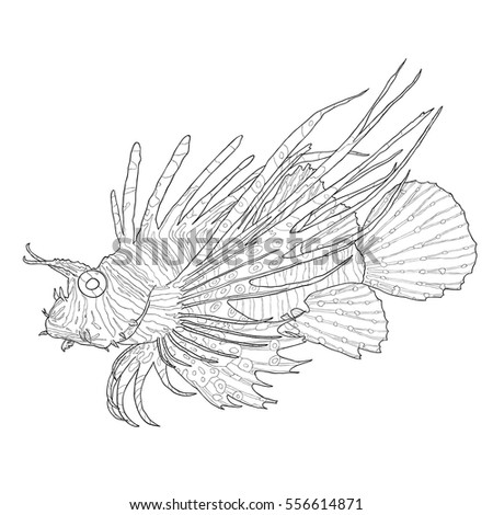 Tropical Fish Scorpion Red Lionfish Stock Vector 556614871