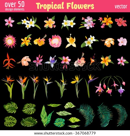 Tropical Flowers Design Elements Set - Vintage Colorful Style  - in vector - stock vector