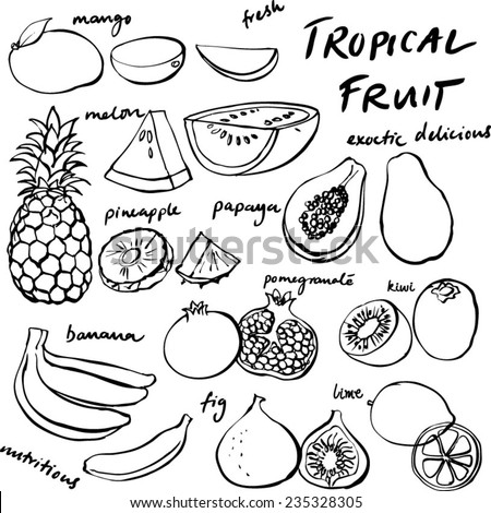 Tropical fruit set vector drawing - stock vector