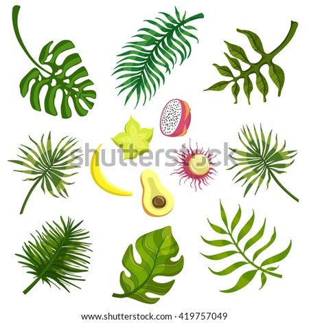 Tropical Leaves And Fruits Flat Bright Color Print In Realistic Vector Design On White Background - stock vector