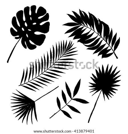 Tropical palm tree grunge leaves set. Vector elements. - stock vector