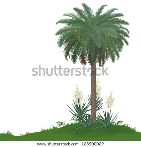 Tropical palm tree with green leaves and plants Yucca, isolated on white background. Vector - stock vector