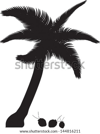 Tropical palm trees, black silhouettes and outline contours on white background. Vector - stock vector