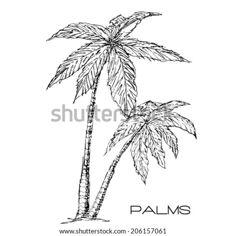 Tropical palm trees. Vector - stock vector