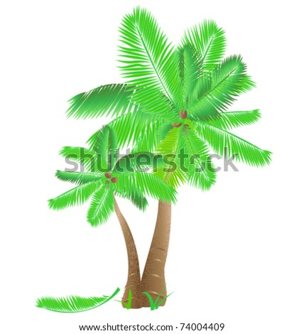 Tropical palms - stock vector