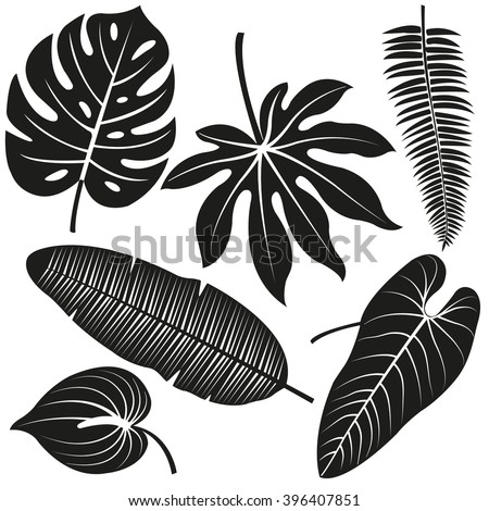 Tropical plant leaves vector silhouette collection. - stock vector