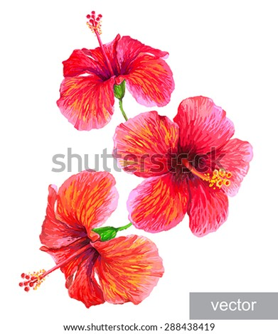 Tropical plants isolated on white. Hibiscus flower. Vector illustration. - stock vector