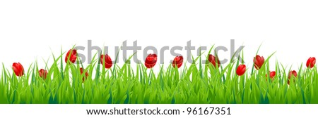 Tulip Border, Isolated On White Background, Vector Background - stock vector