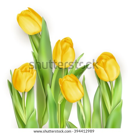 Tulip, bouquet of tulips. Isolated tulips on white background. EPS 10 vector file