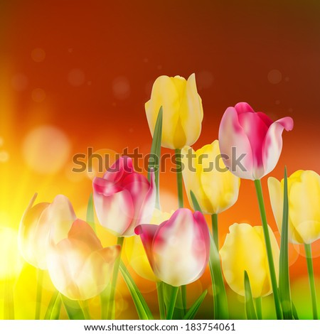 Tulip Field during Sunset. And also includes EPS 10 vector - stock vector