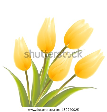 Tulip, floral background. Vector illustration. - stock vector