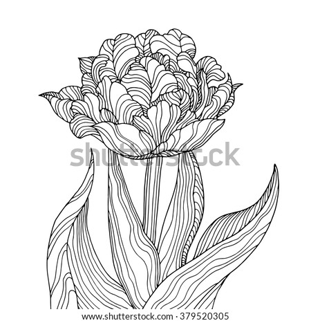 Tulip flower, forest plant line pattern. Vector artwork. Coloring book page for adult. Love bohemia concept for wedding invitation card, ticket, branding, boutique logo, label. Gift for girl and women - stock vector