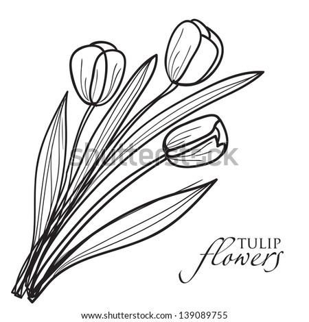 Tulip flowers sketch. Vector - stock vector