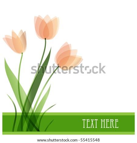 Tulip flowers. Vector card - stock vector