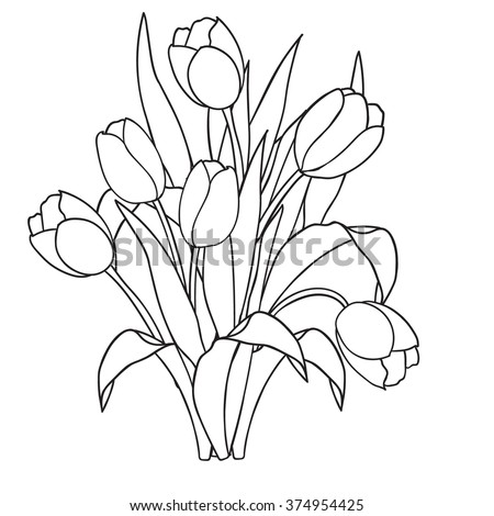 Tulips Flowersblack And White Coloring Pagesvector Illustration Doodle