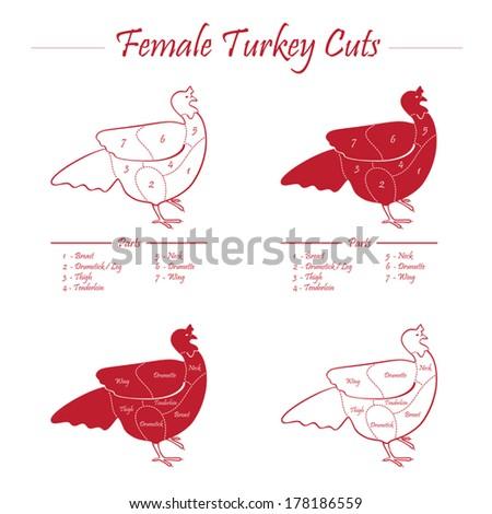 TURKEY FEMALE CUTS SCHEME - red on white - stock vector