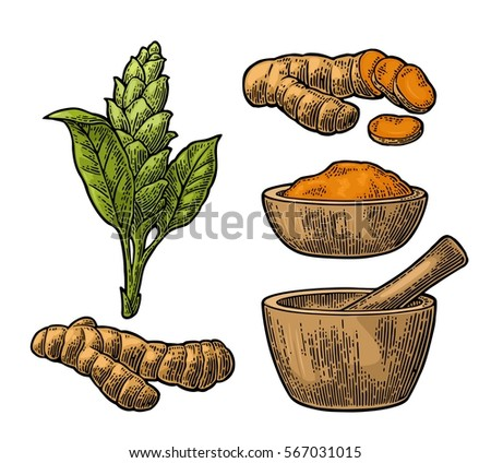 Turmeric root, powder and flower with pestle and mortar. Hand drawn vector color vintage engraved illustration. Isolated on white background.
