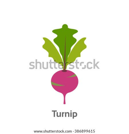 Turnip isolated vector icon - stock vector
