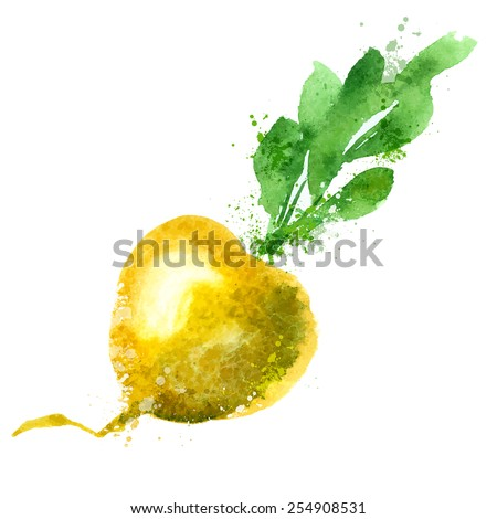Turnip vector logo design template. vegetable or food icon. - stock vector