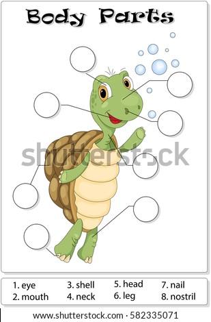 Turtle Body Parts Animal Anatomy English Stock Photo (Photo, Vector ...