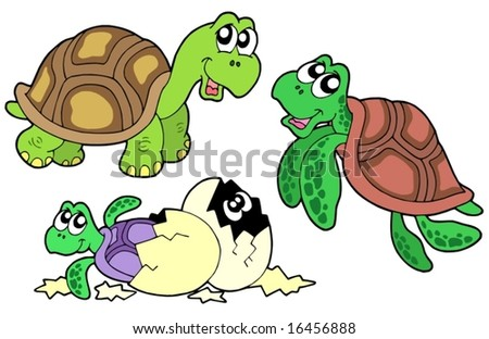 Turtle collection on white background - vector illustration.