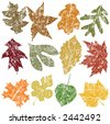 Twelve Grunge Leaves, vector file, change the colors as you like - stock vector