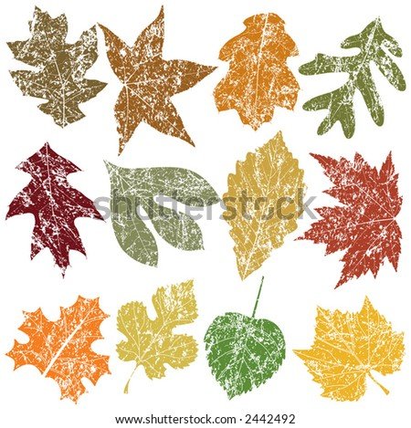 Twelve Grunge Leaves, vector file, change the colors as you like