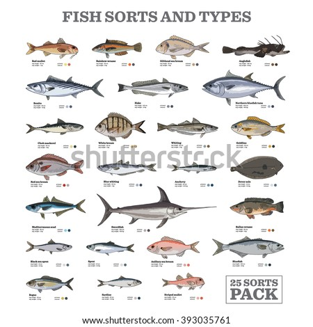 Twenty five different fish sorts and types. Colored vector illustrations.