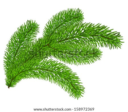 Twig of evergreen fir on white. Vector clip-art