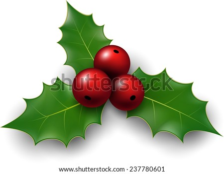 Twig of holly with berry and leaves. Vector illustration.   - stock vector