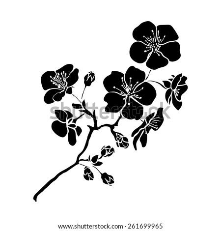 twig sakura blossoms. Vector illustration. Black outline - stock vector