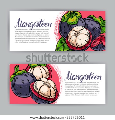 two beautiful banners of ripe delicious mangosteens. hand-drawn illustration