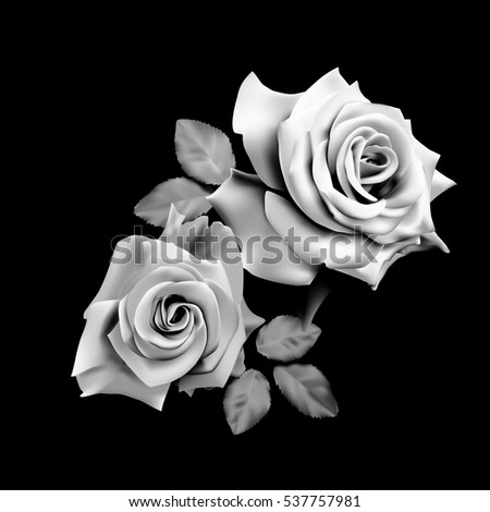 Two beautiful  roses isolated on black background. Monochrome vector illustration.