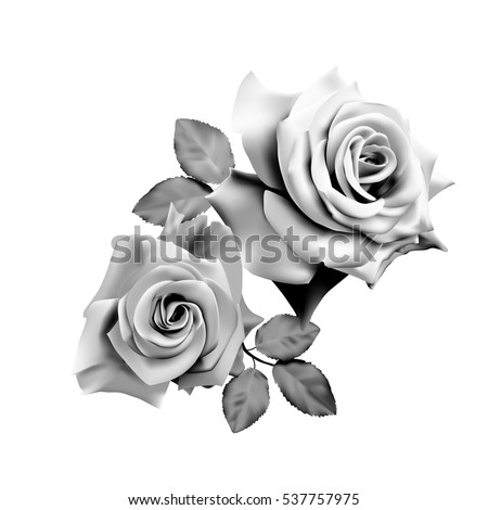 Two beautiful  roses isolated on white background. Monochrome vector illustration.