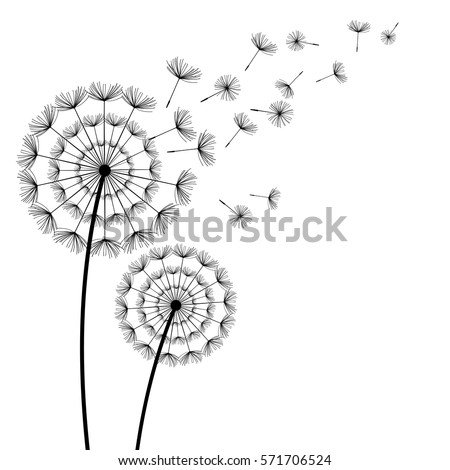 Two Beautiful Stylized Black Dandelions And Flying Fluff On White Background Floral Stylish Trendy Wallpaper