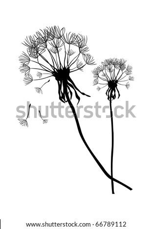 Two black vector dandelions,illustration - stock vector