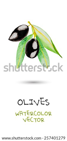 two black watercolor olives on green branch with lives. vector version - stock vector
