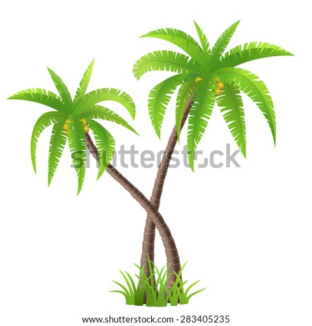 Two coconut palm trees isolated on white, vector illustration - stock vector